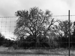 A view of Freeman Ranch while driving to FARF.